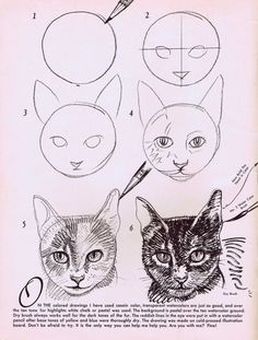 Animals Drawing How to draw cats step by step drawing tutorial. Drawing Lessons, Drawing Techniques, Drawing Tips, Drawing Process, Arte Sketchbook, Realistic Drawings, Teaching Art, Animal Drawings, Pencil Drawings