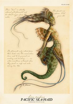 Pacific Sea-Maid by Tony DiTerlizzi.