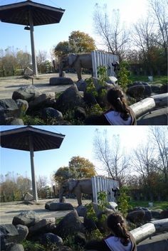 """Toronto Zoo """"spot the differences"""" game."""