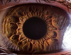 The naked eye - Amazing close-up photos reveal iris surfaces 'like planets'