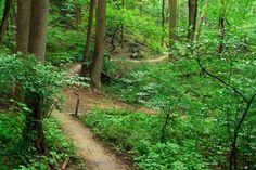 Hartshorne Woods County Park | Navesink Avenue, Middletown, New Jersey 07748, Monmouth County | GetOutsideNJ.com (v3.0.3)
