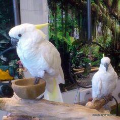 Cockatoo, Parrots, Madrid, Gardens, Bird, Nature, Photography, Animals, Pet Store