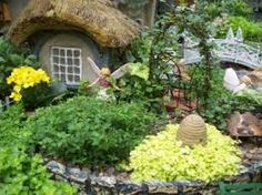 fairy gardens and mini plants