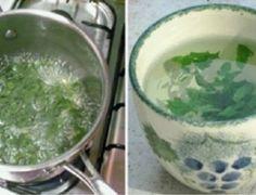 Uma planta milagrosa para as mulheres: equilibra os hormônios e emagrece 1kg por semana! - Tudo dicas