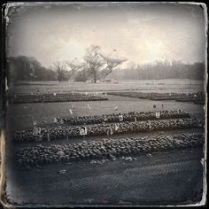 Westerbork Concentration Camp - 30