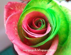DIY Bi-Colour Rose