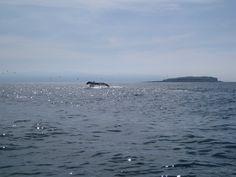 Whale Tale, Mexico near Sayulita