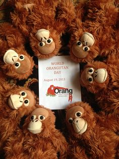 64 Best Orangutan Outreach Cuddly Plush Images
