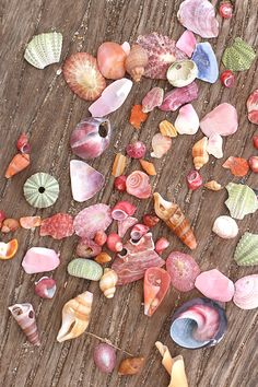 Seashell mess from Jeffrey's Bay beach ♥ #seashells #beach #colours #pastel #paradise #nature #bucketlist #jeffreysbay #southafrica #vegan #plantbased #yoga #barefoot #sea #ocean #traveling #photography