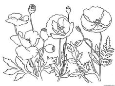 Poppy, : Garden of Poppy Coloring Page