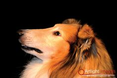 Lisko Pet Portraits, Portrait Photography, Pets, Animals, Animals And Pets, Animales, Animaux, Animal, Animais