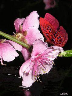 Бабочка на цветах - анимация на телефон №1260108