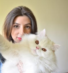 Persian cat, kitty, adorable, pet, family
