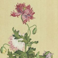 Giuseppe Castiglione, ( 1688 - 1766 ) Missionary to China, arriving in Took the name Lang Shining. Studied Chinese painting combining Chinese techniques and themes with European sensibilities. Painted portraits of the Emperor Qianlong and the Empress. Japanese Painting, Chinese Painting, Chinese Art, Japanese Art, Botanical Drawings, Botanical Illustration, Botanical Prints, Art Chinois, Chinese Flowers