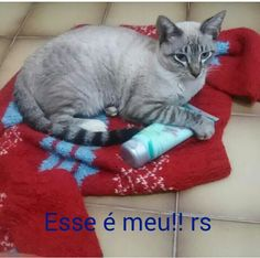 Até o Gato quer usar Eudora! 😍