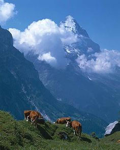 Eiger The clinking of the cow bells, the crisp weather, the fresh air. Ahhhhh Switzerland I love it.