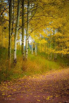 Walking slowly and breathing in the fragrance of aspen...♥