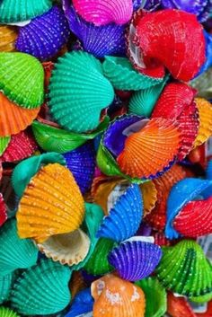 Image about shell in All the Colors of the Rainbow by Sherii L. Taste The Rainbow, Over The Rainbow, World Of Color, Color Of Life, True Colors, All The Colors, Bright Colors, Belle Photo, Rainbow Colors