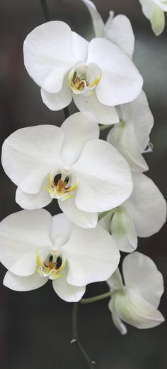 white orchids - if you wanted to add a subtle beachy touch. Plus they would look good draping over on the hanging piece