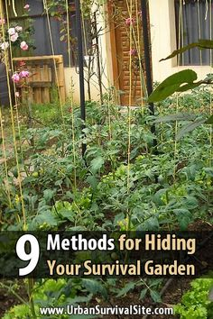 If you're preparing for a long-term disaster and you have a survival garden, use one or more of these methods to hide it from hungry looters.