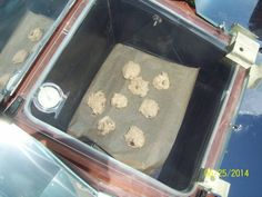 Fully cooked, sort of blonde, oatmeal raising cookies In the Sun Oven