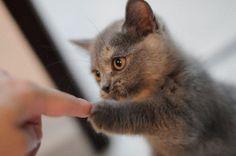 Fist bump.