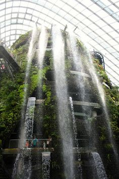 Cloud forest conservatory is an amazing place and I'd love to create a conservation aviary that was similar in scale.