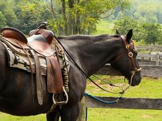 Gentle breaking a horse for riding is an art. If you take the time to train your horse with love and care, you will have a loving companion for life. Riding Stables, Horse Riding, Riding Gear, Horse Saddles, Horse Tack, Horse Harness, Horse Bits, Dressage, Westerns