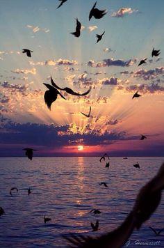 Sunset over the beach. Birds flying. #Repix #App