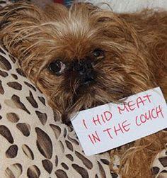 Public pet shaming - ninemsn News