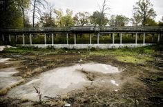 The Belle Isle Children's Zoo in Detroit, abandoned since 2002. Tigers, Elephants, and monkeys used to live here...now it has become truly wild as the non-native landscaping takes over.