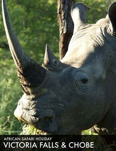Find your perfect African safari. Best priced safari holidays available. Your trusted specialized safari operator. Safari Holidays, Safari Adventure, Victoria Falls, African Safari, Wildlife, Elephant, Tours, Animals, Parks