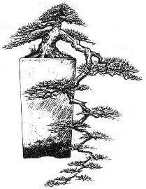 Literati Bonsai style  Bunjingi  In nature this style of tree is found in areas densely populated by many other trees and competition is so fierce that the tree can only survive by growing taller then all others around it