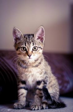 Kittens are so adorable!