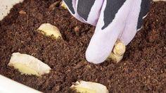 Evinizde Zencefil Yetiştirmek ister misiniz? - Faydalı Bilgin Plantar, Diy And Crafts, Outdoor Decor, Gardening, Backyard Ideas, Ideas Para, Learning, Google, Vegetable Garden