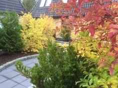 Our Atrium garden. Atrium Garden, Superior Room, Double Room, Romantic, Colours, Fall, Holiday, Plants, Beautiful