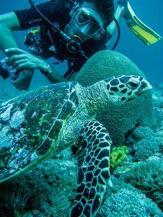 Snorkeling with Sea Turtles on Gili Trawangan - Underwater Photo Gallery