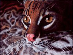 A photorealistic drawing in ballpoint pen by Samuel Silva of a wild margay cat