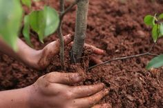 10 Things You Can Do to Slow Climate Change: Plant a Tree