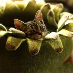 Не смогла пройти мимо этой красоты - кошачьи гнезда. Сказочные, уютные, необычные! Сама бы в таком жила. Одним словом красота неземная! Любуйтесь кому интересно.
