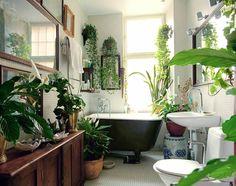 Ich habe angefangen an frische Zimmerpflanzen zu denken. Wie soll das aber funktionieren mit weniger Licht und bei dieser Feuchtigkeit?! Ich habe ein ...