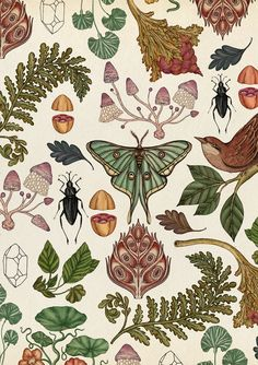 Magazine botanical illustration cover art by Katie Scott. Contemporary