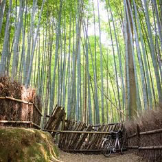 The Japanese Ministry of the Environment compiled 100 Soundscapes of Japan, a list of distinctive sounds they deem worthy of governmental protection. Along with bells, tree frogs, silk looms, and waterfalls, the whisper and rattle of wind blowing through the Kyoto bamboo forest holds a place on the protected roster. Via T+L (www.travelandleisure.com).