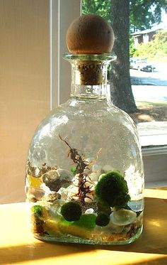 Big Decanter Live Marimo Ball Zen Pet Terrarium by MyZen on Etsy