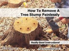 Easy Tree Stump Removal - Cupcakepedia | It's going to be a fun summer, I can tell already. :D