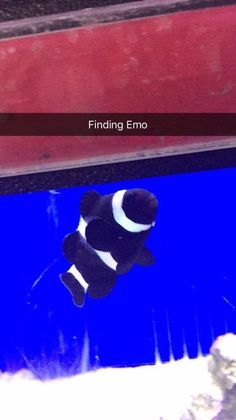 My girlfriend sent this to me to cheer me up - Finding Emo. http://ift.tt/2roSpQP #lol #funny #rofl #memes #lmao #hilarious #cute