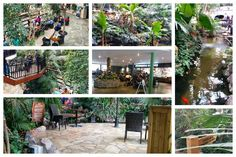 Center Parcs Longleat Forest Travel Review   Ergohacks