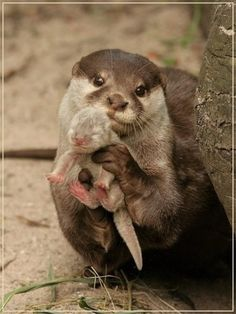 Mother otter holding her baby up in her arms