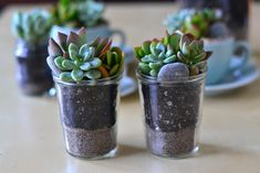 Vintage glass containing succulents