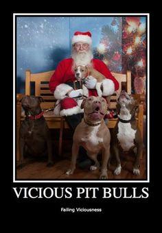 Vicious Pit Bull....Failing Viciousness #pitbull